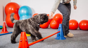 Internet Dog Trainers: Our Top 7 | Dog Facts & Fun | Mad Paws Blog