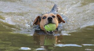 Top tips to make your dog love the water
