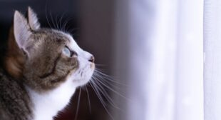 Cat owner who sold car to pay for pet's treatment gets huge surprise from world's best buyer   SoraNews24 -Japan News-