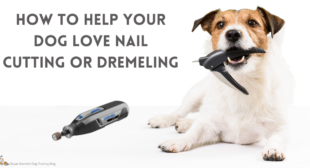 Vlogcast: How to Help Your Dog LOVE Nail Cutting or Dremeling